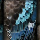 Blue Winged Kookaburra (Close up of wing) by Rookwood Studio ©