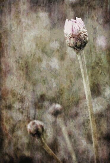 Awakening by Trish Woodford