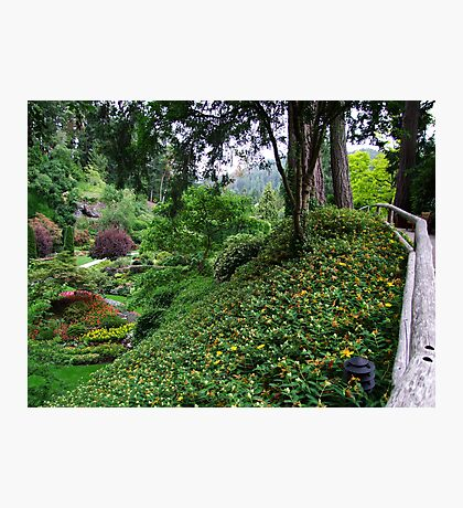 Sunken Garden No.4 Photographic Print