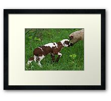 Cute Brown and White Lamb with Ewe Framed Print
