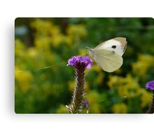 Insect Summer Canvas Print