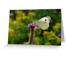 Insect Summer Greeting Card
