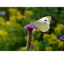 Insect Summer Photographic Print