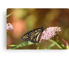Monarch Delight... Canvas Print