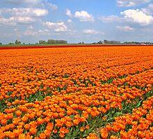King Willem-Alexander by Jo Nijenhuis