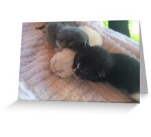 A Trio of Kittens Greeting Card