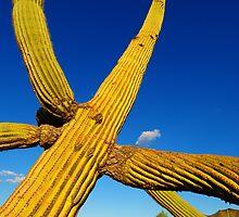 Saguaro Cactus by Conor Quinlan