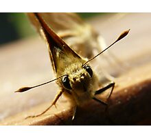 a little moth with big eyes Photographic Print