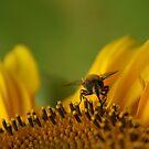 Bee-52 by Sam Mortimer