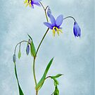 Textured Lily by Penelope Thomas