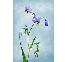 Textured Lily Photographic Print