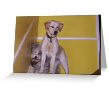 I'M FIRST! Greeting Card