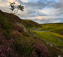 Falcon Clints - Upper Teesdale by David Lewins