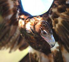 Eagle1b by John Peel