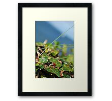 Lady in the Leaves Framed Print