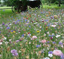 Wildflower Patch . . . by PattyB46