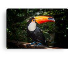 Toucan No. 2 of Iguazu Canvas Print