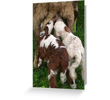 Twin Lambs Suckling From Their Mother Greeting Card