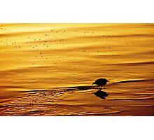 Sunset Dip Photographic Print