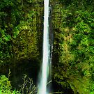 Akaka Falls by Sharon Ulrich