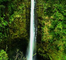 Akaka Falls by Sharon Ulrich