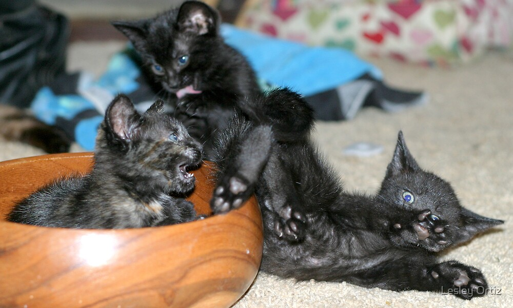 Kitty Bloopers:  Battle Of The Bowl by Lesley Ortiz