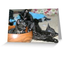 Kitty Bloopers:  Battle Of The Bowl Greeting Card