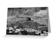 Cassidy Dock Greeting Card