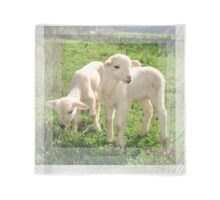 Spring Lambs Grazing On Farmland Scarf