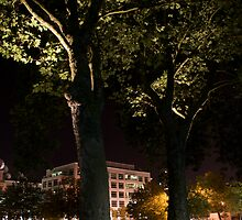 Seattle Center Tree by alexmorrison12