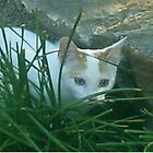 kitten, stalking, cute, white cat, stalker, nature by AnimalHealerArt