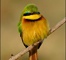 Little Bee-eater by Leon Rossouw