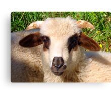 Sheep Portrait Close Up Canvas Print