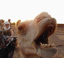 An Unhappy Camel by Vanilla Sky