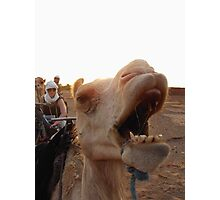 An Unhappy Camel Photographic Print