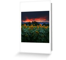 Sunsets Storms and Sunflowers Greeting Card