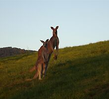 Roo Family by KazM