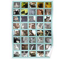 catsandmorecats Poster