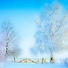 "Winter Landscape  ""Trees with fence"" by Manfred Belau"