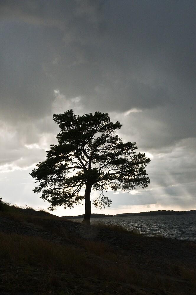 Silhouette by Ilva Beretta