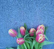 Tulips in Tungsten (1) by dreamNwish