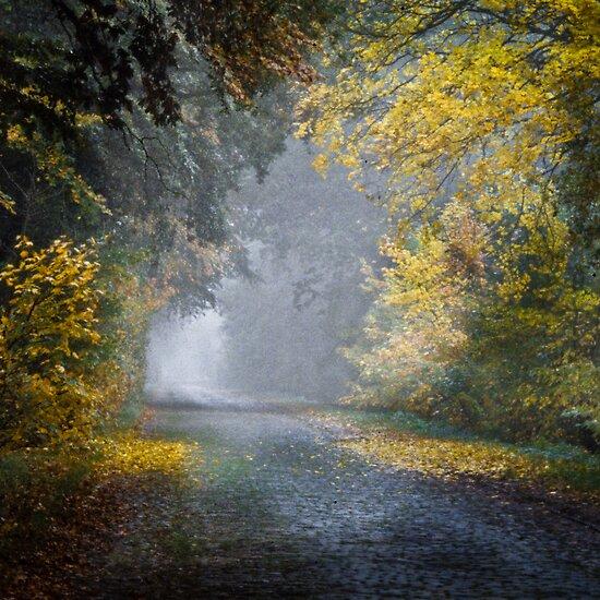 Morning Mist  by Manfred Belau