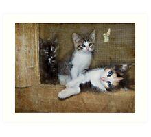 Barn Kittys Art Print