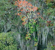 Tikal Trees by AnaBrun