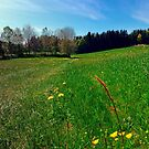 Green grass, flowers and blue sky   landscape photography by Patrick Jobst