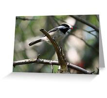 Rudolph the Black-Capped Chickadee (Frame 2) Greeting Card
