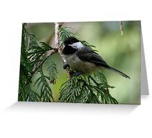 Black-Capped Chickadee in Western Redcedar Tree Greeting Card