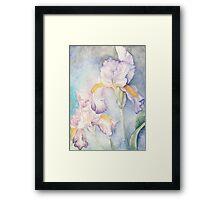 Softest Irises (Detail) Framed Print