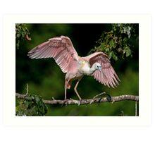 Cajun Flamingo Art Print