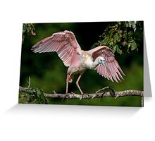 Cajun Flamingo Greeting Card